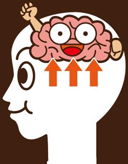脳に必要な栄養素